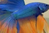 Which fish food is best for aquarium parrot fishes pets for How often to feed fish