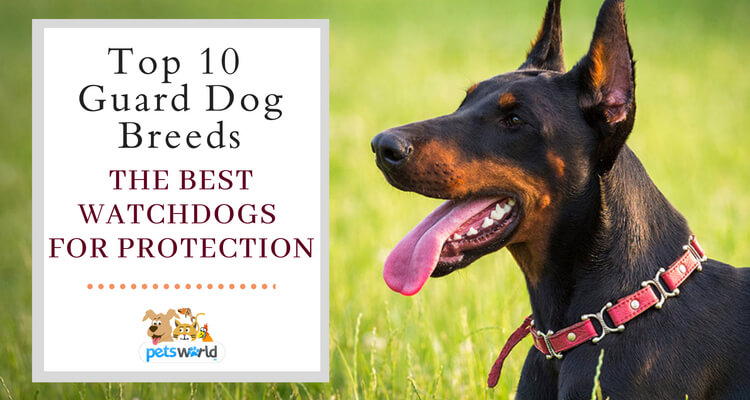 Watchful dog breeds