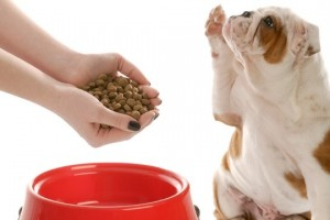 How Much Wet Food Should You Feed Your Dog