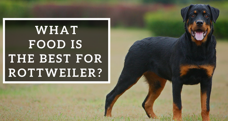 What Food Is The Best For Rottweiler Pets World