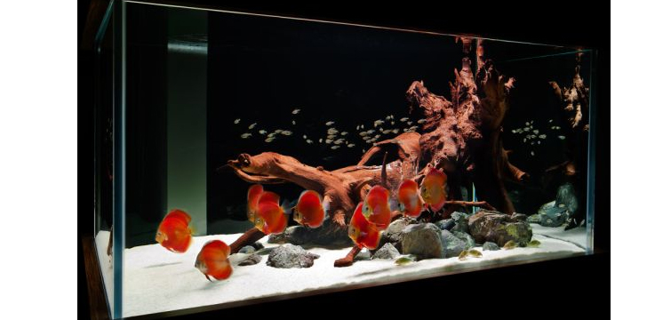 Contemporary-fish-tank-rafted-in-hues-of-captivating-red