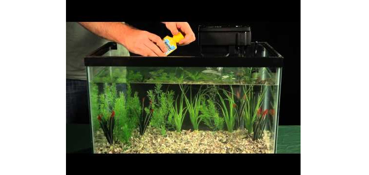 how to choose a healthy betta fish