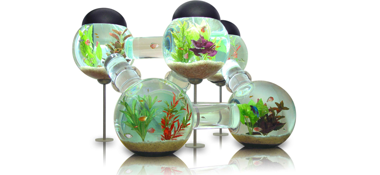 Freshwater-tropical-fish-tank-pictures