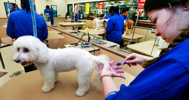 Grooming for Bichon Frise