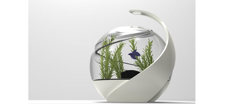 Top 10 coolest fish aquariums pets world for Wall hanging fish tank