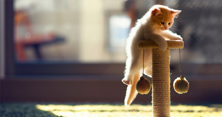 playing-cat