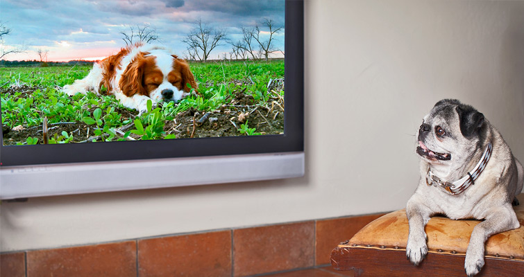 poster-p-dog-tv-share-the-remote-control