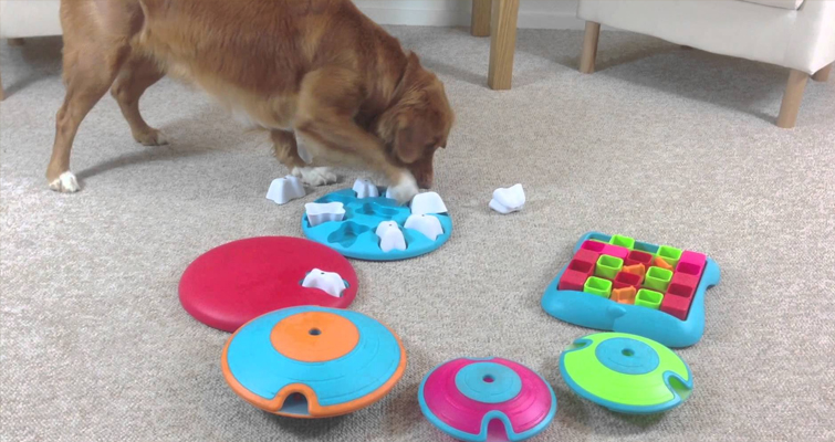 Food Puzzle By Dog