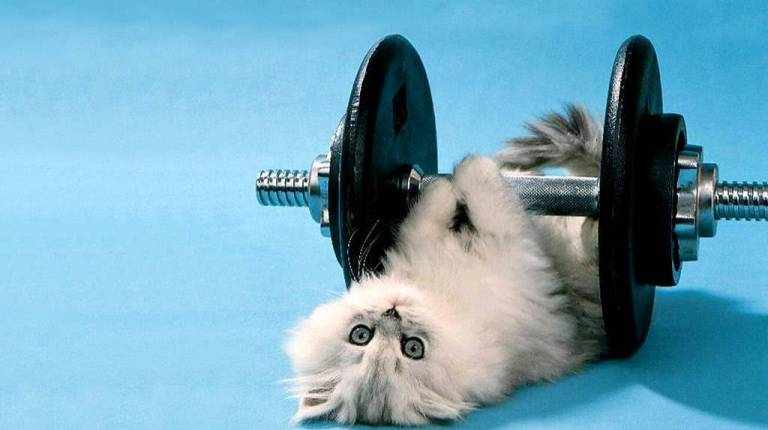 baby-cat-lifting-weights