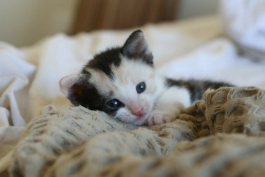 5 Kitten's Cute Habits | Pets World