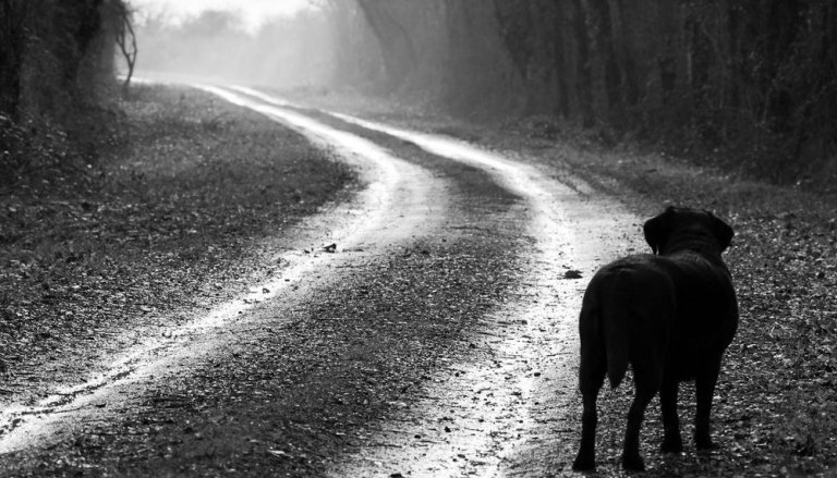 lonely-dog