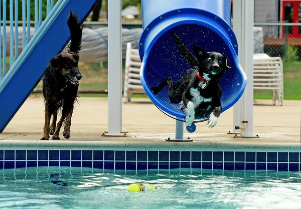 Stay active with your dog pets world for How to train your dog to swim in the pool