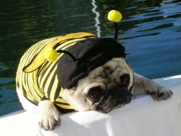 25-Ridiculously-Funny-Costumes-A-Dog-Can-Ever-Have-16