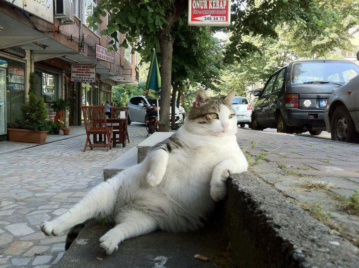 Chilled-Cat