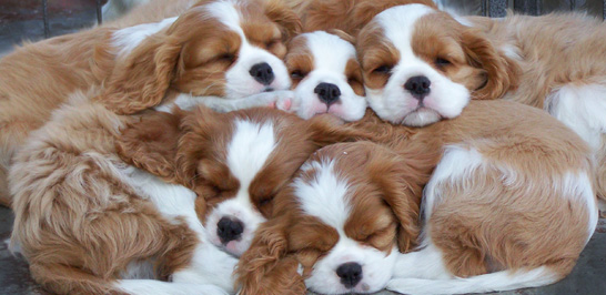 Pet Adoption Adopt Pet Dogs Cats In Dhanbad Quikr