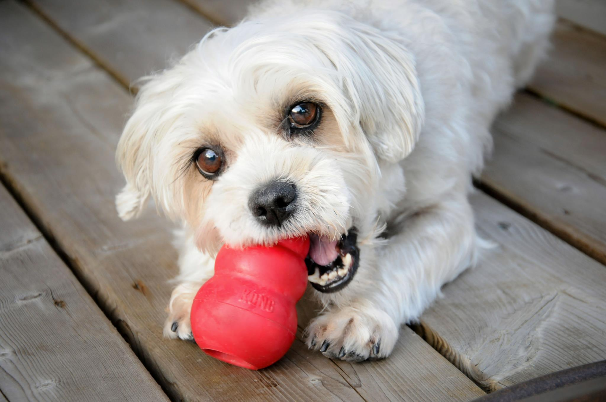 All Your Dog Needs Choose Best Dog Toys