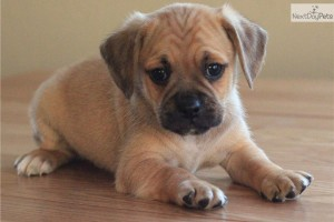 Pets for Adoption | Pet Blog - Dogs, Cats, Fishes and Small