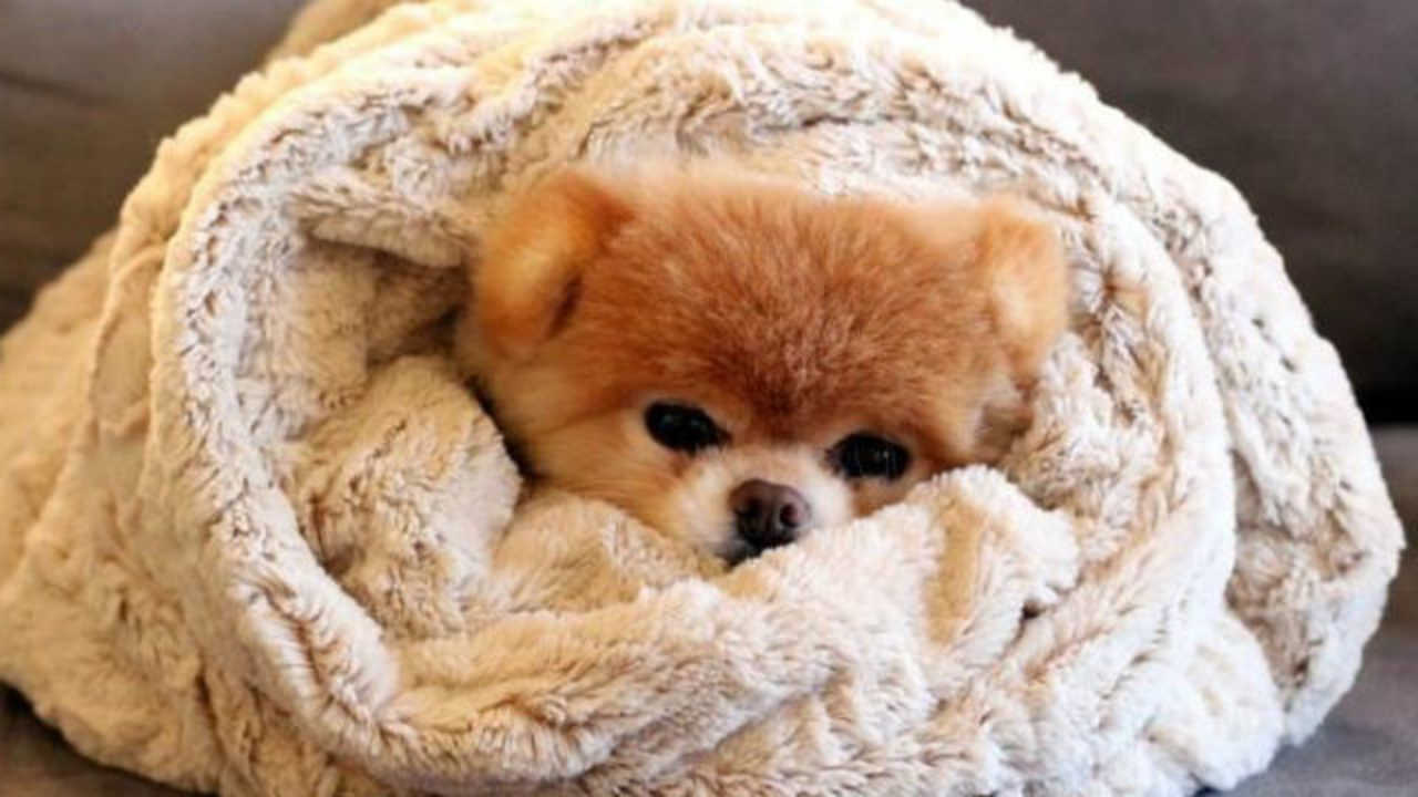 Do Dogs Get Cold Like Humans