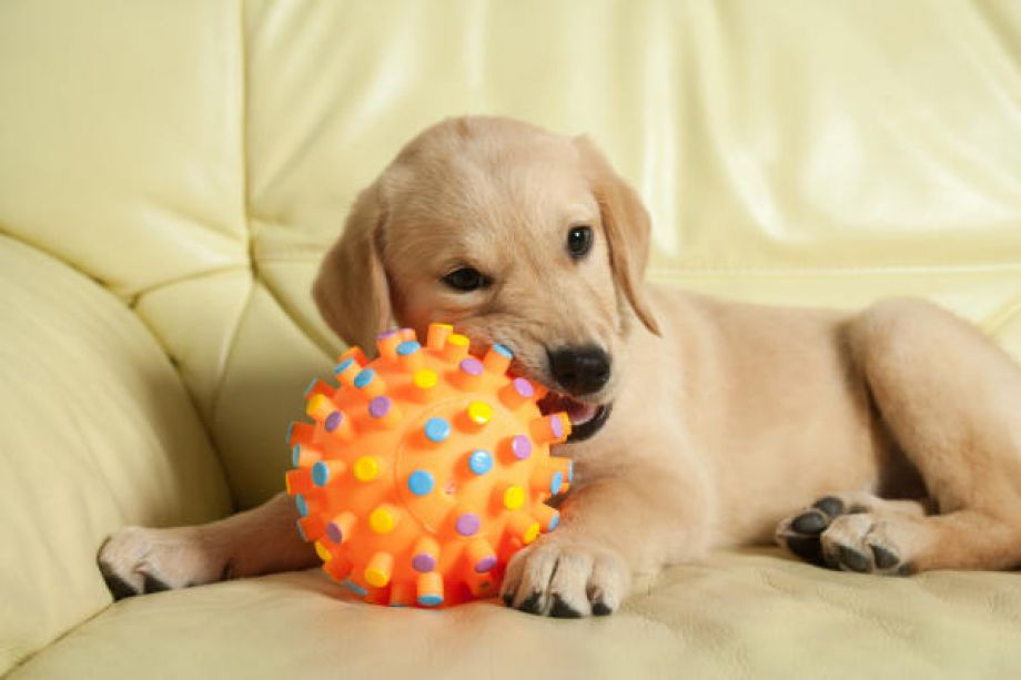 Image result for dog and chewing toy