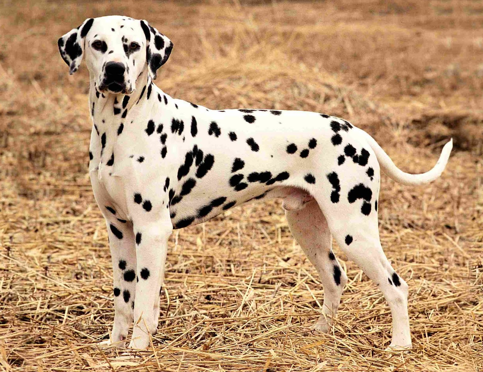 Best suited dog breeds for indian climate pets world for Types of dogs with photos