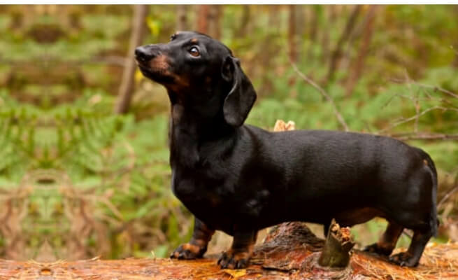 10 Most Popular Dog Breeds in India | Pets World