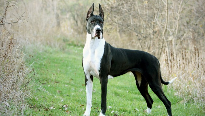 Top  Dog Names In India