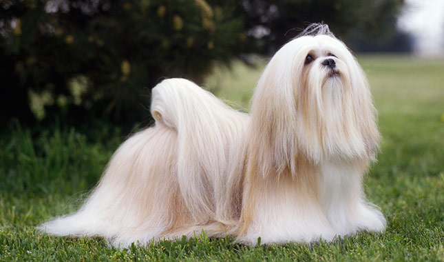 Most Popular Dog Breeds in India | Pets World