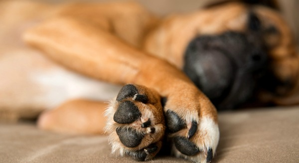 10-ways-to-reduce-your-pets-paw-print