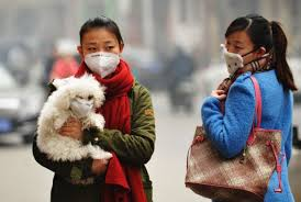 pollution and pets