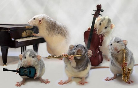 rat-playing-musical-instruments-6