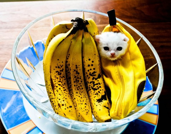 the-world_s-top-10-best-images-of-cats-in-disguise-10