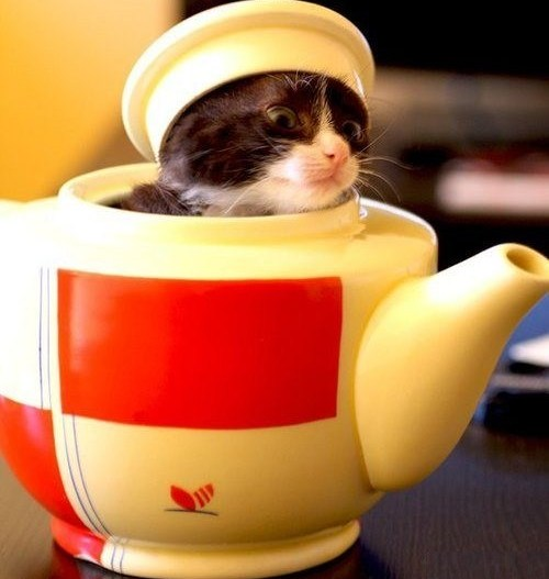 the-world_s-top-10-best-images-of-cats-in-disguise-3