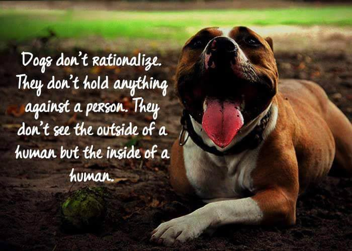 12 Lifehacker Dog Quotes To Turn You Into A Wiser Person Pets World