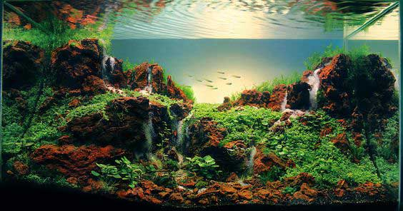 21 Fish Aquarium Designs by Takashi Amano | Pets World