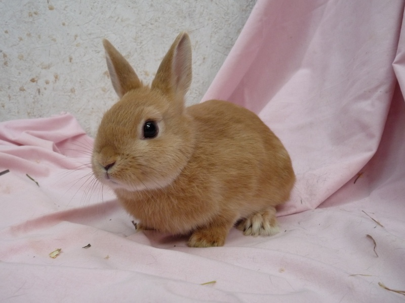 Popular Rabbit Breeds in India | Pets World