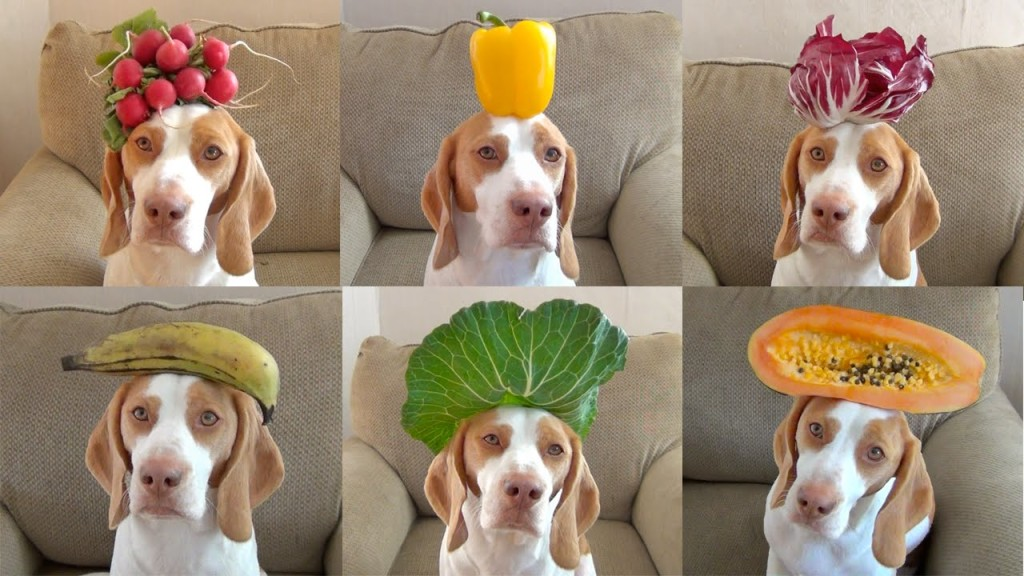 Fruits and Dogs