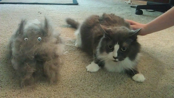 brushed out another cat