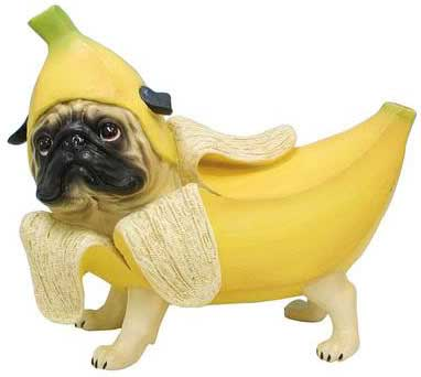 10 Human Foods Suitable For Dogs Pets World