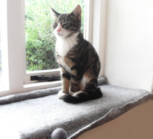 Cats that just love to gaze through windows sitting on top of windowsills and often drift into a restful sleep will certainly welcome your move to line its favorite spot with a soft mat. Image:Notonthehighstreet.com