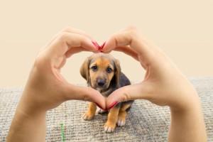 Dog Heart 1