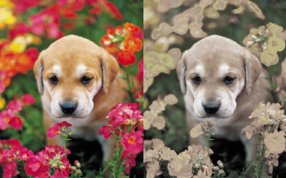 The colors you see may be different in your dog's vision. Image:www.ahsaplitjacobi.weebly.com