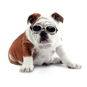 Bull Dog: This breed was developed in England. Bull dogs have short hair and would require jackets lined with fleece and dog sweaters to beat the chilly weather. Even Bull dog is a brachycephalic breed; therefore make sure it is equally comfortable in summer months. Image source: http://www.dogexpress.in/