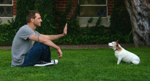 Teaching your dog commands such as 'lie down' and 'sit' work on two levels, firstly it will establish your leadership and will help to calm your dog . Image: canineminded.com