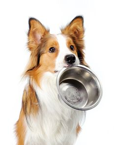 Royal Canin India Pvt Ltd has introduced age appropriate diet for dogs with special Senior Dog Food Formulas for Mini, Maxi and Medium Dog Breeds Image:www.pinterest.com