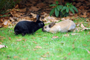 rabbits in love-M