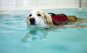 Image 2 Hydrotherapy
