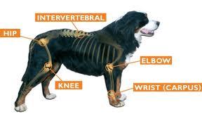 Image:dogboydave.com