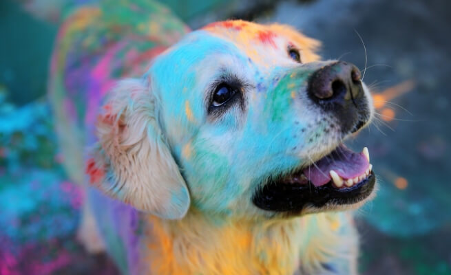 Pets holi safety 1