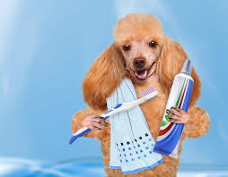 In the absence of regular brushing bacteria flourishes in the mouth that leads to plaque formation on the teeth. Plague together with pooch's saliva and mineral deposits in the mouth cause swelling and reddening of the gums. Image - anguspost.com