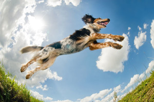 Active Dog Image 1